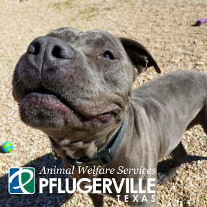 Animal Welfare Services | City of Pflugerville, Texas