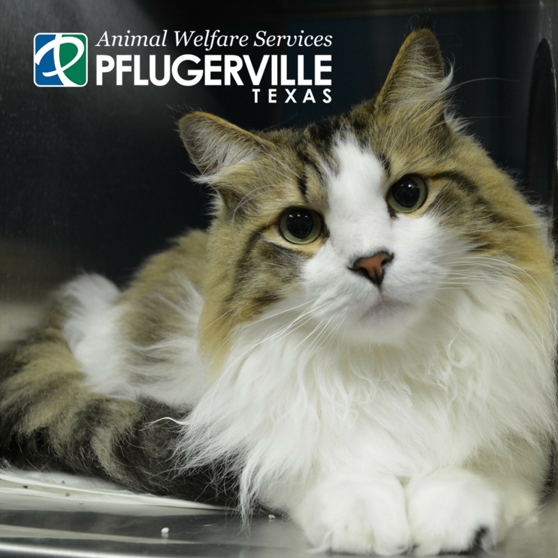 Animal Shelter | City of Pflugerville, Texas