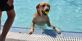 pfurry swim events image cropped