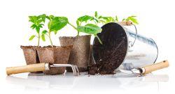Gardening Spade, Rake, Plants, Soil, Bucket