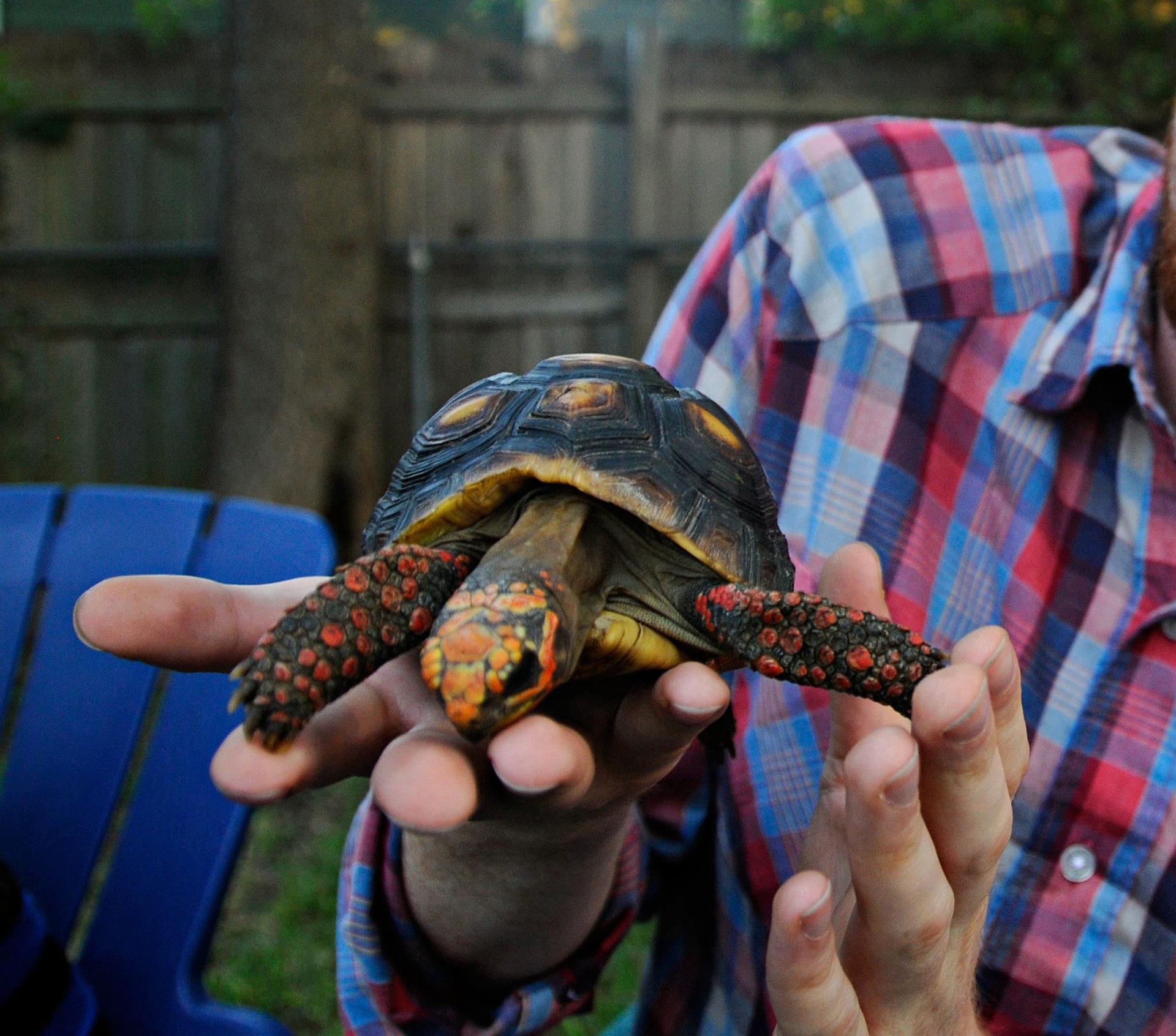 man holding turtle